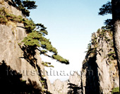 Mt. Huangshan 1-Day Tour